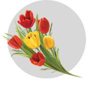 pr-fragrance-GOYA_Floral_flat